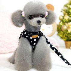 Pet Dog Cat Harness Teddy Bear Vest Polka Dot Strap Breathable Collar Adjustable #Unbranded
