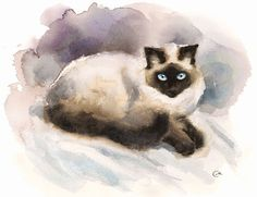 Watercolor Cat Siamese  Original Painting 8x10 by CMwatercolors