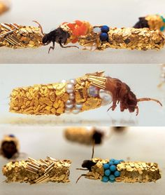 These photos are the result of a collaboration between French artist Hubert Duprat and a group of caddis fly larvae. To make these beautiful creations Duprat simple provided the materials and let the caddis fly larvae do what they do naturally. Carapace, French Artists, Art Plastique, Oeuvre D'art, Bling Bling, Creations, Artsy, Gemstones, Inspiration