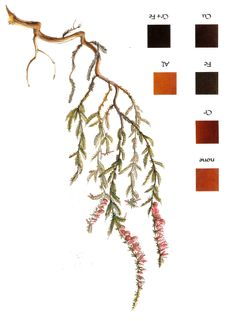 Natural dyeing: Heather (ling)
