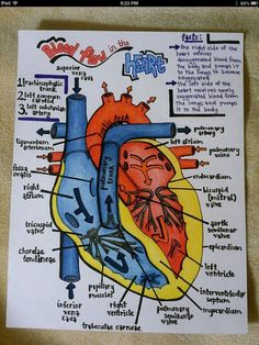 Cardiac Nursing | Cardiovascular System.. where was this stuff when I was in nursing ...