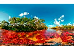 """Caño Cristales, Columbia – Cano Cristales is a Colombian river located in the Serrania de la Macarena, province of Meta. The river is commonly called """"The river of Five Colors"""". Pamukkale, Death Valley, Mysterious Places On Earth, Monte Roraima, Beautiful World, Beautiful Places, Amazing Places, Most Romantic Places, Explorer"""