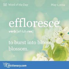 effloresce: to burst into bloom; blossom #dictionarycom #words