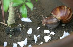 Use crushed-up eggshells to deter pests.
