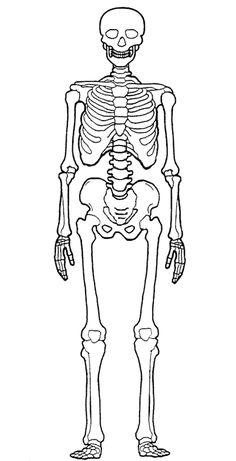 Desenhosass: Desenho De Um Esqueleto Humano Zombie Drawings, Skeleton Drawings, Skeleton Art, Pencil Art Drawings, Easy Drawings, Human Anatomy Drawing, Anatomy Art, Skeleton Template, Human Body Art