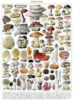 there are a LOT of them mushrooms out there