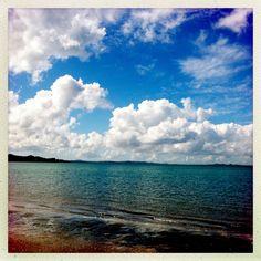 Cornwallis Beach, Auckland.  August 2013.  Photo by N Noble