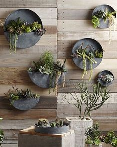 These Orbea Zinc Planters from @diggardens are made from galvanized iron with an aged zinc finish are perfect for storing indoor #plants and #succulents. by designmilkeveryday