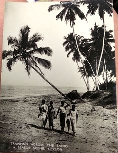 Picture Postcard Ceylon (Sri Lanka)  Tramping Across The Sands  A Seaside Scene Ceylon Beach Palms by collectiblejewels on Etsy