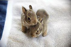 babyyyy bunniess!