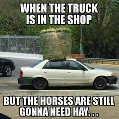 Get that hay to the horses ny way you can! lol - Horses Funny - Funny Horse Meme - - Get that hay to the horses ny way you can! lol The post Get that hay to the horses ny way you can! lol appeared first on Gag Dad. Funny Horse Memes, Funny Horses, Funny Animals, Horse Humor, Funny Memes, Farm Animals, Funny Quotes, Equestrian Memes, Equestrian Problems