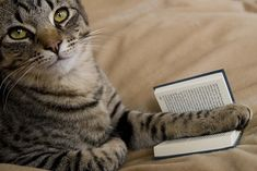 Reading about cats.