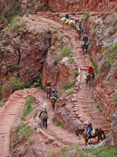 The Grand Canyon wows everyone with its stunning vistas. But to get the full experience, visitors should explore the rim and hike or take a trip down into the canyon itself.
