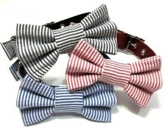 dog collars!