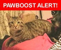 Please spread the word! Loki (low-key) was last seen in Sanford, NC 27330.    Nearest Address: Post Office Rd, Sanford, NC