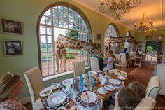 Giraffe Manor Kenya breakfast - So much fun!
