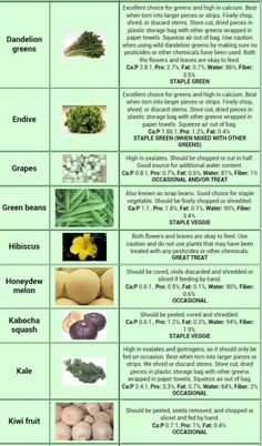 Go Back > Gallery For > Bearded Dragon Food Chart