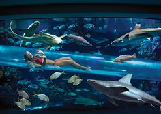Impressive Hotel Pools You Ll Want To Dive Into Shark Tankshark Poolvegas