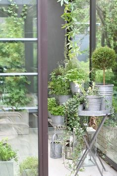 plants potted in galvanized containers