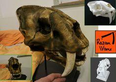 printed Sabretooth skull, colured (LaBrarea Colour), assemled and finished. 3d Printing, Lion Sculpture, It Is Finished, Skull, Colour, Statue, Printed, Art, Impression 3d