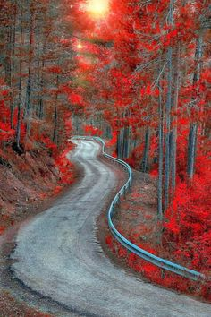 Bosque Country, Spain - winding road, red red leaves falling midst the fall.