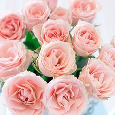 rose ronsard office des fleurs flower truck 9 octobre 2012 paris