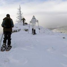 Experienţe în România: Snowshoeing Adventures – Romanian Journeys Utila, Pine Forest, Romania, Journey, Snow, Activities, Adventure, The Journey, Adventure Movies