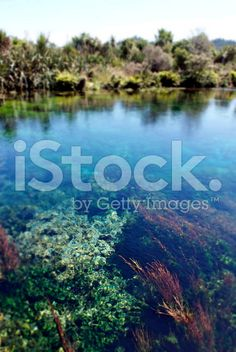 Clear Water, Pupu Springs, Takaka, New Zealand royalty-free stock photo Images Of Peace, Image Now, Are You Happy, New Zealand, Serenity, Zen, Scenery, Royalty Free Stock Photos, Landscape