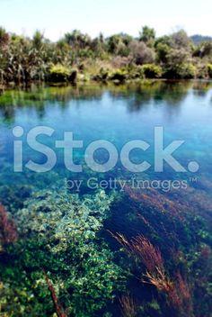Clear Water, Pupu Springs, Takaka, New Zealand royalty-free stock photo