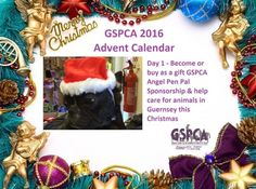 GSPCA Advent Calendar Day 1 - The gift of sponsoring animals in Guernsey this Christmas | GSPCA Guernsey