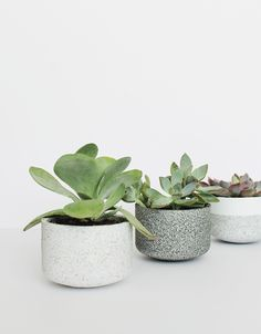 today's DIY is one of the easiest in a while! many of you have said you want some more planter projects, so here's the first of hopefully many. guess what you do. yep that's right you just spray pa...