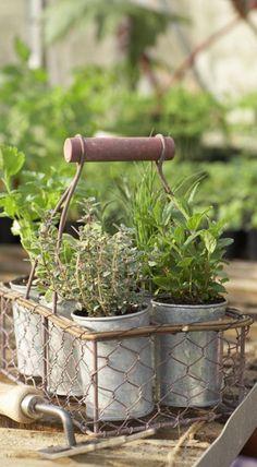 Πότε να φυτέψω μυρωδικά και βότανα;