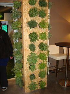 vertical indoor herb garden in small wooden cylinders