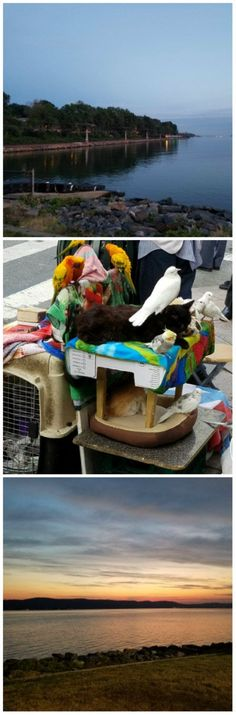 """Photo Challenge: LAYERED - A Street Entertainer & his Companions - """"A story is a kind of biopsy of human life. A story is both local, specific, small, and deep, in a kind of penetrating, layered, and revealing way."""" Lorrie Moore #photography #inspiration"""