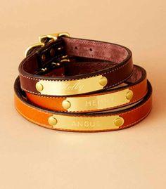 Distinguished leather dog collars