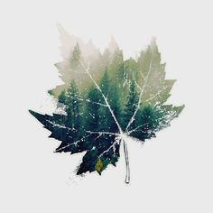 #waptreeoverlay #nature  #leaf  #minimalism  #trees #doubleexposure