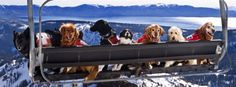 Everyone is getting into the #Sochi spirit! We can't stop smiling at these Squaw Valley rescue dogs #RescueDogs #Sochi2014