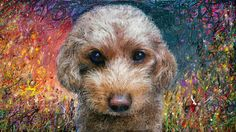 PCペイントで絵を描きました! Art picture by Seizi.N:   愛犬ティアモの絵を描きました昨日描いた2枚目です、親(犬)バカでしょうか可愛いです。  Some Nights - Fun - Peter Hollens http://youtu.be/_AfTBoCKJbU
