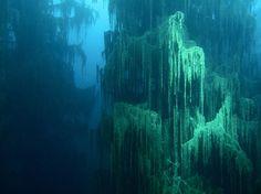 The Sunken Forest of Lake Kaindy   Amusing Planet
