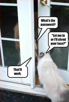 Funny Animals with Quotes