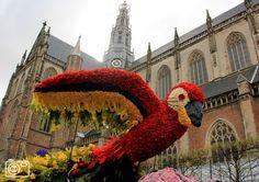 HAARLEM - Bloemencorso in Haarlem. Spring flower festival, Haarlem
