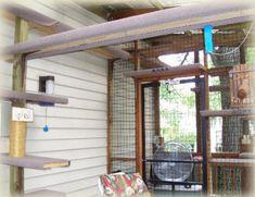 Cat Enclosure Cat Run   Outdoor | Cats | Pinterest | Cat, Outdoor Cats And Cat  Houses