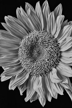 My Flower, Flowers, Black And White Photography, Creative Ideas, Sketches, Paintings, Fine Art, Classic, Pictures
