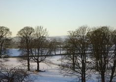 Trees in the snow at Hellifield, Yorkshire.