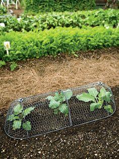 Chicken Wire Cloche Plant Protector, 3-in-1 | Gardeners.com