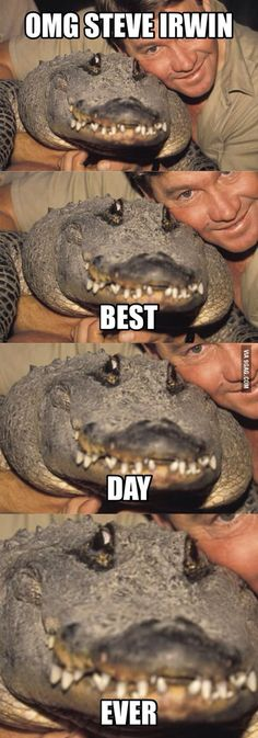We compile the great collection of Top 30 steve irwin memes. Steve Irwin memes are viral right now on social media and internet. Funny Animal Jokes, Cute Funny Animals, Funny Animal Pictures, Animal Memes, Funny Photos, Funny Images, Really Funny Memes, Stupid Funny Memes, Funny Relatable Memes