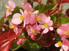 Try these Hard To Kill Flowers for Your Garden | Tuberous Begonia, Metal Containers, Bright Flowers, Small Plants, Window Boxes, Growing Flowers, Hanging Baskets, Petunias, Flower Beds