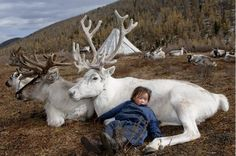 Children in the tribe are exposed to the reindeer from birth | A Lost Mongolian Tribe Was Rediscovered By A Photographer