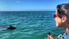 Não tenho nem palavras pra descrever a emoção desse momento!  no words needed!  . . . #golfinhos #dolphins @vertigem_azul  #wanderlust #weekend #lisbon  #portugal #visitportugal  #summer #travel #travelblogger #lisboa #vemparaportugal #setubal #luliemportugal @visit_setubal  #arrabida #beach #sea #bluesky #nature #troia #comporta #boat #natureza