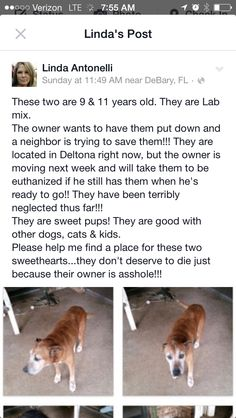 URGENT!! Owner moving going to put 2 dogs down if home can't be found contact person on FACEBOOK. Please share they are located in FL. Near DELTONA.